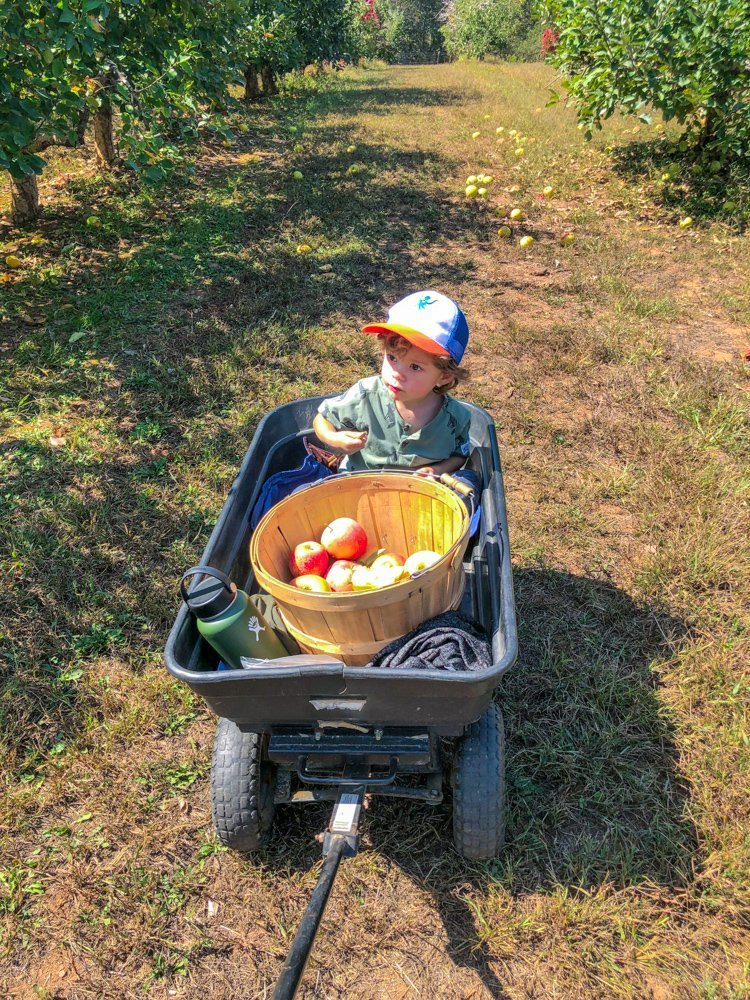 little boy sitting in wagon in apple picking farm near asheville