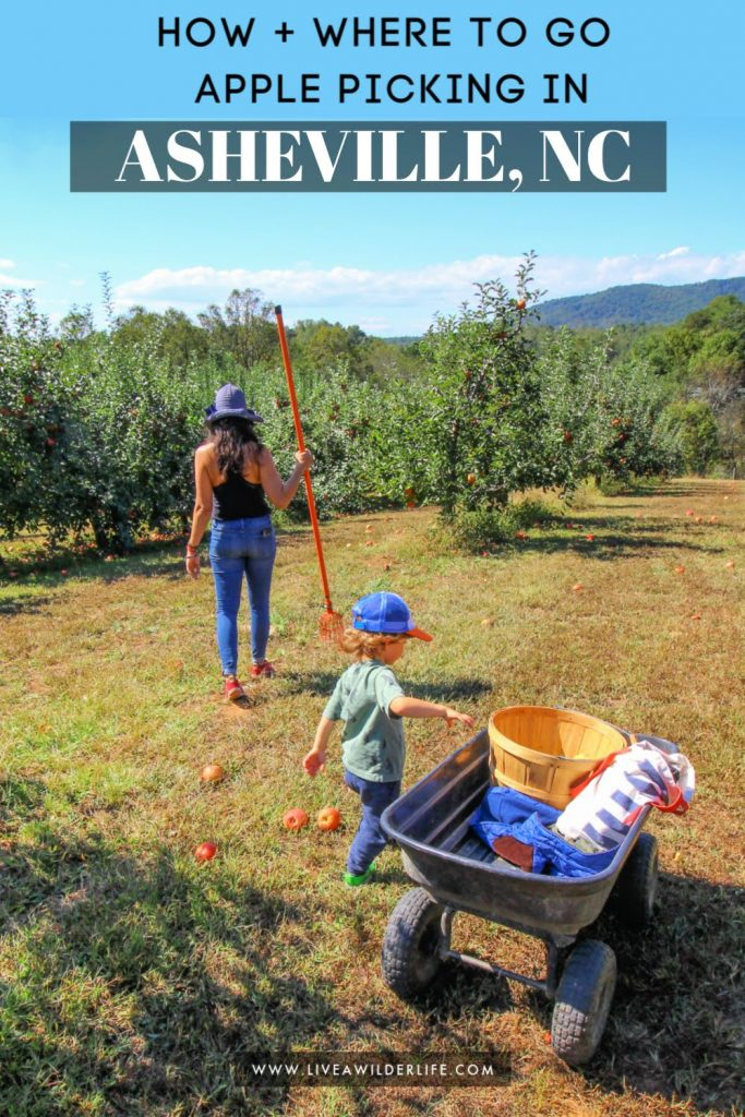 mom and son apple picking in orchard