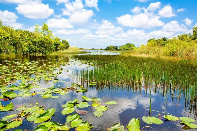 florida wetlands at Everglades National Park
