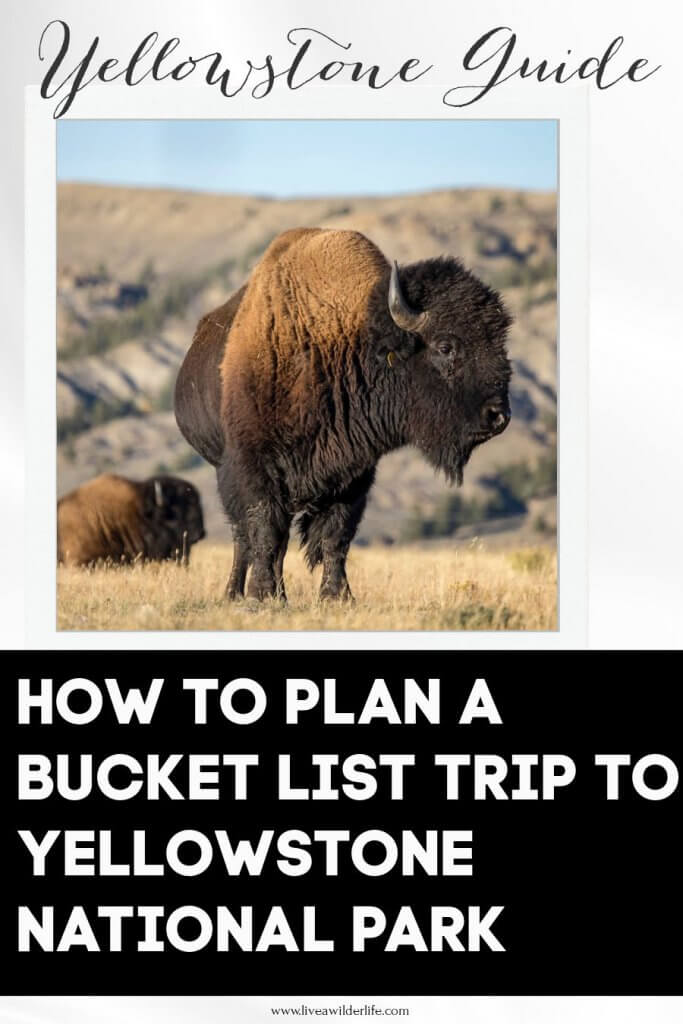 Pinterest graphic for planning a trip to Yellowstone