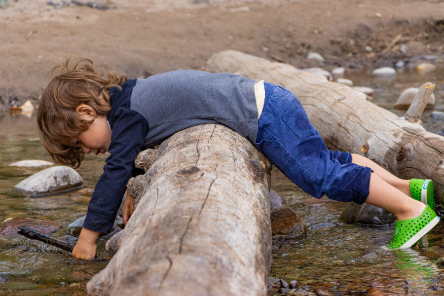 Young boy toddler leans over a fallen tree stump and plays in the water.