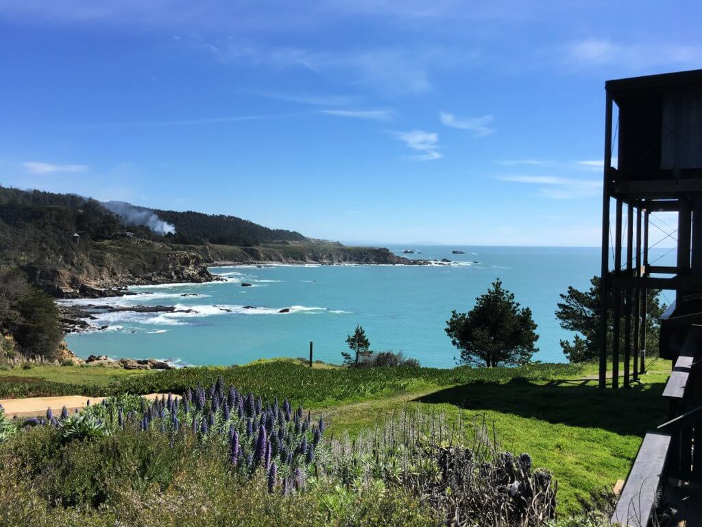 Beautiful cliffs and blue water of the Pacific Ocean with purple wildflowers in the forefront