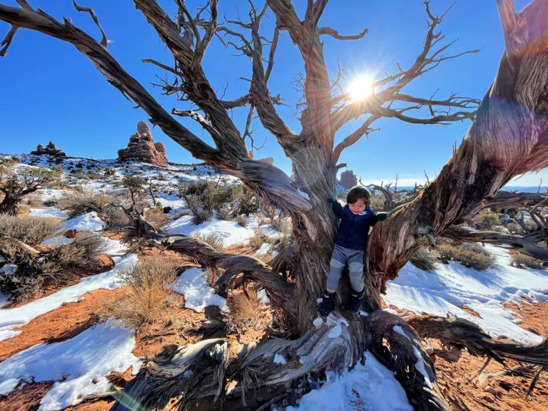Little boy playing in a tree of a red desert landscape at Arches National Park